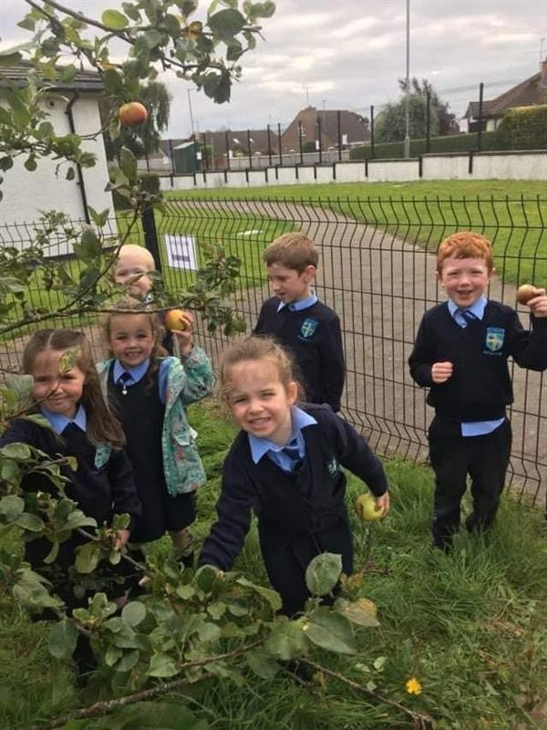 Primary 2 boys and girls picking apples in our wildlife garden